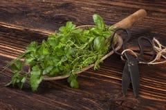 各种各样的芳香烹饪草本,土气样式 免版税库存照片