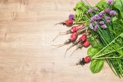 新鲜的萝卜用绿色庭院草本 食物健康成份 免版税库存照片