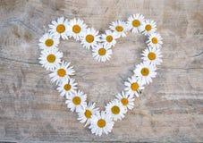 καρδιά μαργαριτών Στοκ Εικόνα