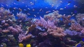 热带珊瑚鱼的礁石 股票录像