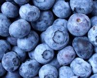 新鲜的蓝莓 免版税图库摄影