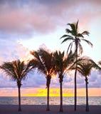 迈阿密海滩,佛罗里达五颜六色的夏天日出或日落与棕榈树 免版税库存照片