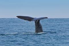 鲸鱼尾巴 免版税库存照片