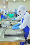 Работники переставляют, который слезли креветку на поднос для установки в замороженную машину в фабрике морепродуктов в перепаде  Стоковые Изображения RF