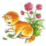 котенок кузнечика Стоковые Фотографии RF