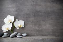 在灰色背景的白色兰花和温泉石头 免版税库存图片