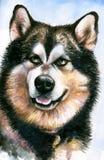 爱斯基摩狗 库存图片