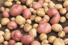 土豆在袋装的未加工的蔬菜食物样式纹理和背景的 免版税库存照片