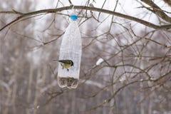 由饲养者的山雀鸟 免版税库存照片