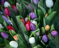 美丽的郁金香花束 库存照片