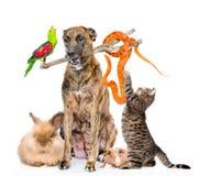 滑稽的小组不同的动物 背景查出的白色 免版税库存图片