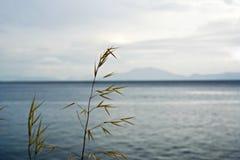 海 图库摄影