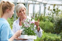 妇女要求职员植物忠告在园艺中心 免版税图库摄影