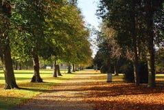 秋天树大道或一条道路在格兰瑟姆,英国 库存照片