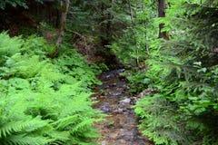 细流在森林里 库存图片