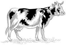Корова Стоковое Изображение RF