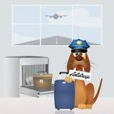 药物狗在机场 库存图片