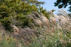 засевает высокорослое травой Стоковые Изображения RF