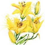 лето неба лилий сада цветков предпосылки голубое яркое изображение иллюстрации летания клюва декоративное своя бумажная акварель  Стоковое фото RF