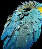 蓝色和金金刚鹦鹉羽毛 图库摄影