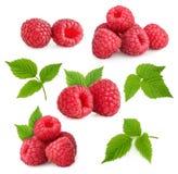 查出的莓 库存图片