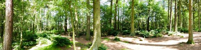 森林全景 免版税库存图片