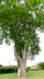 Μικρό αγόρι και μεγάλο δέντρο Στοκ Εικόνα