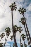 在桄榔树下 免版税图库摄影