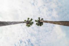在桄榔树下 免版税库存照片