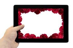 在手中压片个人计算机有与红色玫瑰在被隔绝的屏幕上的花背景灌木的框架的  图库摄影