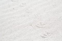 鸟踪影在沙子的在海滩 免版税库存图片