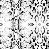 Текстура кожи змейки Предпосылка безшовной картины черным по белому вектор Стоковая Фотография