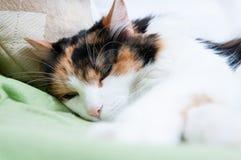 Сонный кот Стоковое Изображение