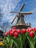 有充满活力的郁金香的传统荷兰风车 免版税库存照片