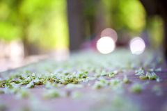 在地面上的自然绿色叶子有被弄脏的晴朗的背景 图库摄影