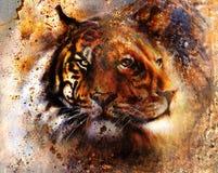Το λιοντάρι και η τίγρη πορτρέτου αντιμετωπίζουν, πορτρέτο σχεδιαγράμματος, στο ζωηρόχρωμο αφηρημένο υπόβαθρο σχεδίων φτερών Αφηρ Στοκ Εικόνες
