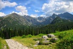 路由石头做成通过绿色领域和杉树森林 免版税库存图片