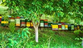 蜂箱在森林里 库存照片
