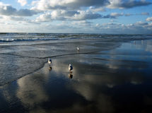 云彩和鸟在海滩 库存照片