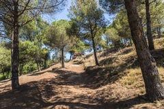 Среднеземноморской лес Стоковая Фотография RF