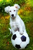 与黑白球的小狗 库存图片