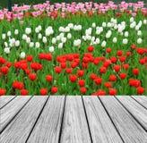 与五颜六色的郁金香庭院的木大阳台 图库摄影