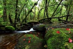 在清迈,泰国雨林的美丽的小瀑布  免版税库存图片