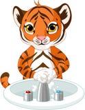 小的老虎洗涤的手 库存图片