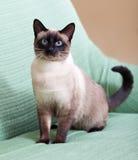 在长沙发的猫在家 免版税库存照片