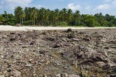 与棕榈树的岩石海滩 免版税库存照片