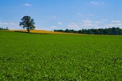 更加绿色的牧场地 图库摄影