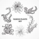 海洋植物、叶子和海草的汇集 葡萄酒套黑白手拉的海洋植物群 免版税库存图片