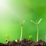 绿色植物成长  库存照片