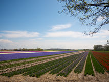 在领域的开花的花 免版税库存照片